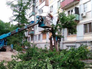 Клининг спил деревьев